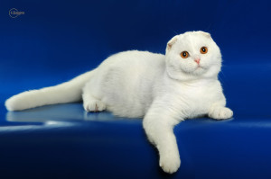 FUR CAT DE LA RANCHO WHITE BEAR